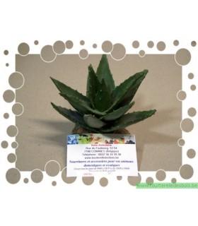 Plante vert foncé 11.50 CM modèle [CAC2104]