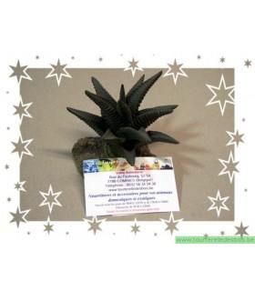 Cactus vert clair 10.50 CM modèle [CAC2105]