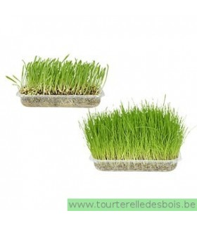 HERBE POUR CHATS