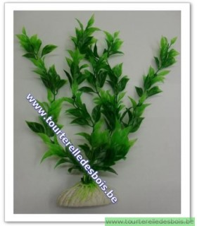 PLANTE VERTE HYGROPHYLA 30 CM