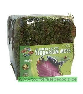 ZM Terrarium moss [CF2-MBE]