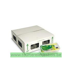 GRILLONS NOIRS - VRAC - T7 - ADULTE - 300 P