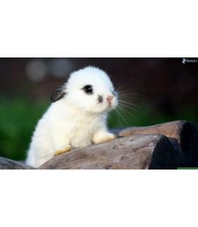 congele - petit lapin