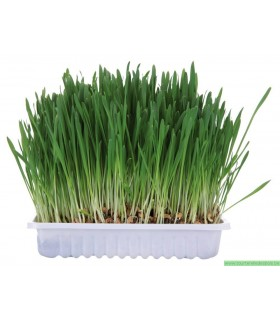 HERBE POUR RONGEURS 100G.